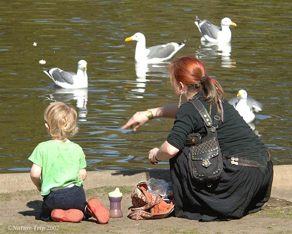 Feeding_Gulls_081_72DPI