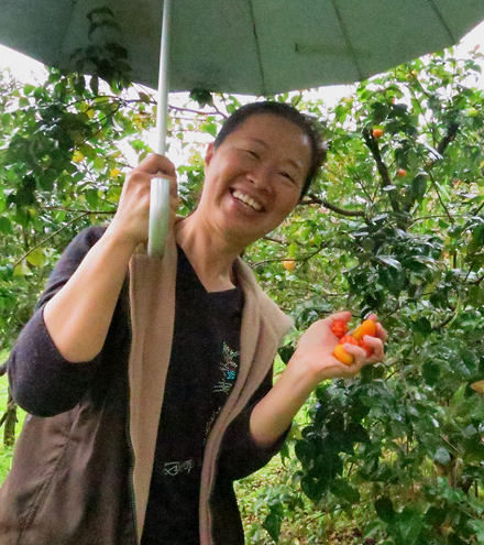 Our hostess at a Gust House in Hualien picking fresh Passion Fruit for us to enjoy on our journey