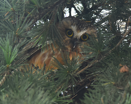 Hoo knows what critters are lurking in our street trees?