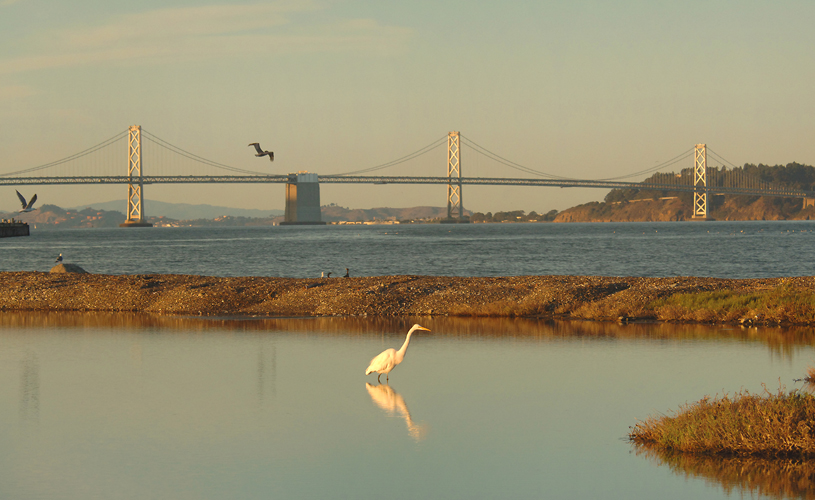 We've been heartily involved through a partnership with the Port of San Francisco and Golden Gate Audubon Society on the restoration of a derelict area known as Pier 94. A real success story with many lessons learned about native habitat renewal and working with public agencys.