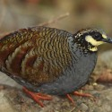 Taiwan Recon: tale of the Pheasant trail