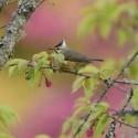 Taiwan recon: sharing spring